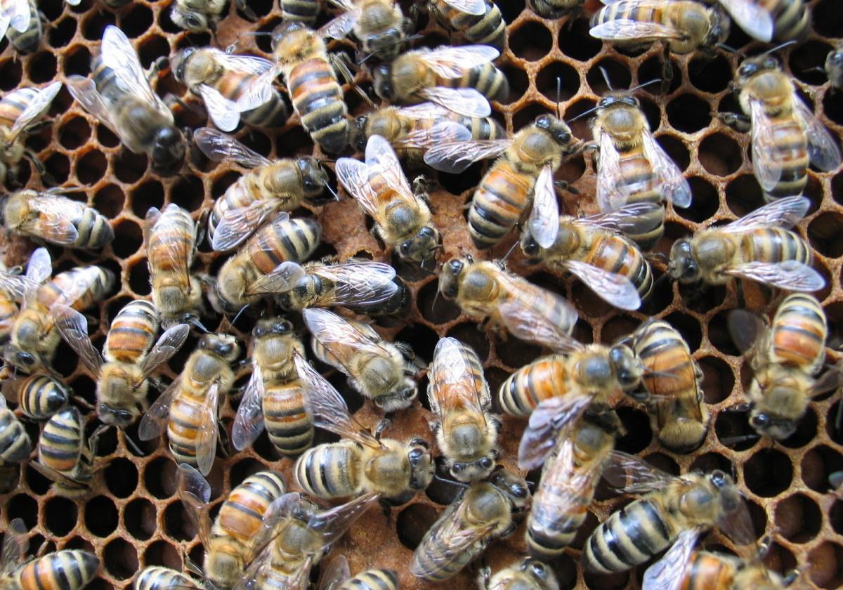 bees comb